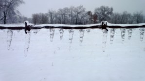 icicles and pasture